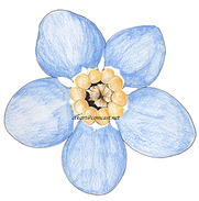 Forget-Me-Not web.png