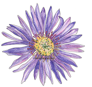 Aster web.png