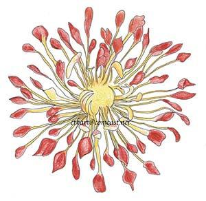 Matchsticks Chrysanthemum