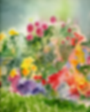 garden-watercolor for web.png