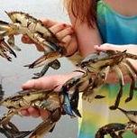 crab4.jpg
