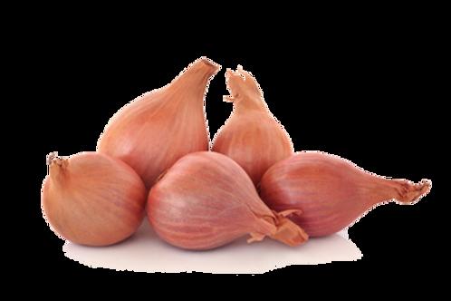 Cebolla Escalonia x Libra