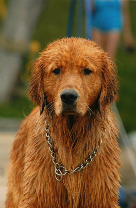 wetdogwithchain.png