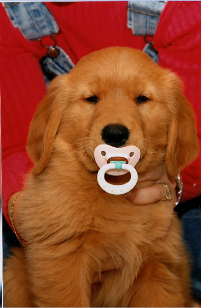 puppywithsoother.png
