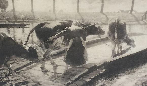 """C4710-3, Jean-Emile van Cauwelaert,Litho van het schilderij """"Koeienveer"""""""
