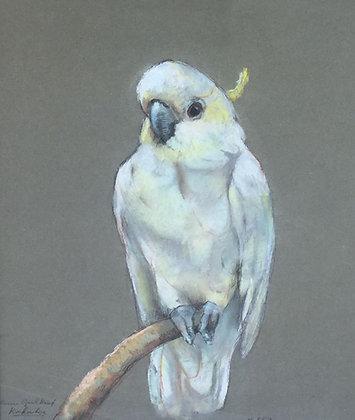 C3736-25, Johanna Pieneman, Kleine geelkuif kaketoe
