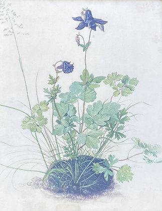 C5073-12, Botanische tekening orchidee