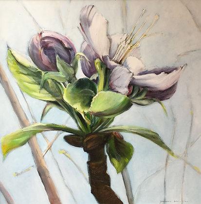 C4461-A5, Jeroen Dercksen, Magnolia
