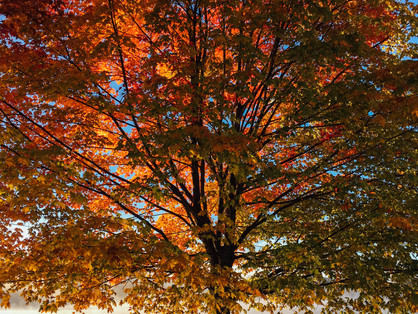 What the Trees Teach us in Fall