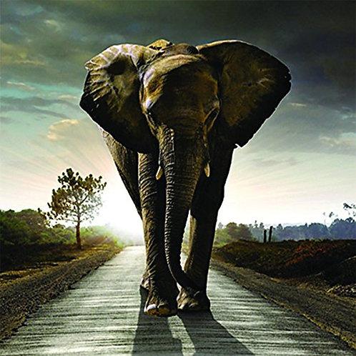 3D Holographic Card - Up Close Elephant Stomp - AL5VZ065