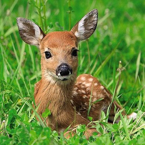 Ani'mates 3D Holographic Card - Deer - ALVL5006