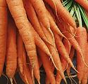Carrots_small.jpg