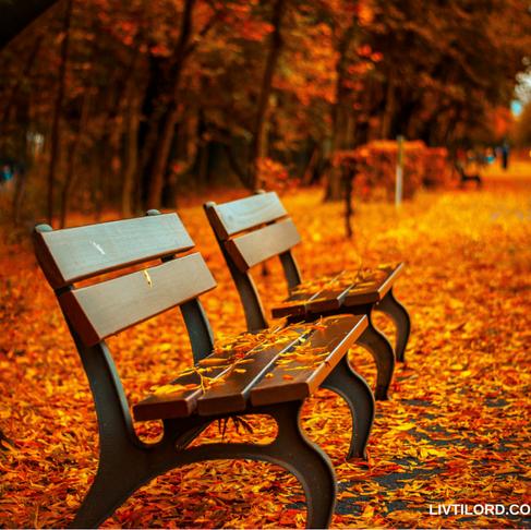 Høsten ble aldri den samme…