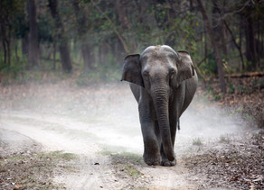 4 Exquisite National Parks for a Wildlife Holiday in India