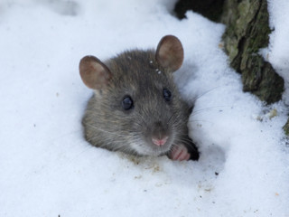 Are pests still active during the winter season?