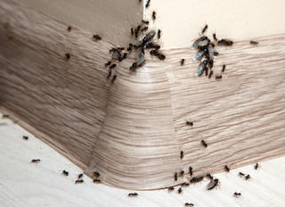 What's going to happen in your home after these rainy days? BUGS, BUGS...and more BUGS...