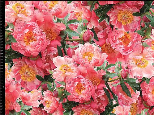 Rosa Japonic