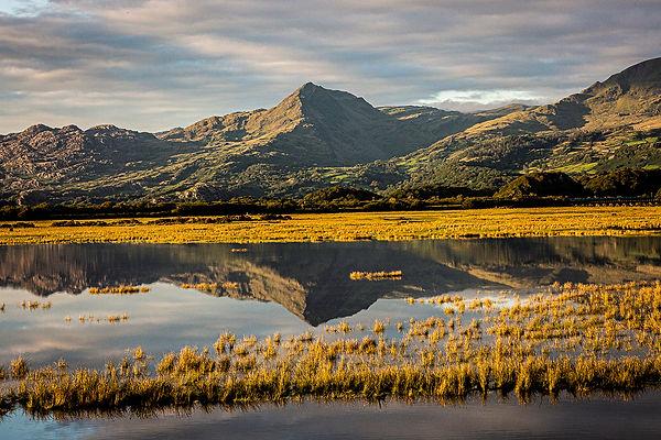 Gwladys Cob Reflections.jpg