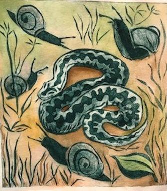 snake in the grass Su Walls.jpg