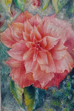 camellia Kiran.jpg