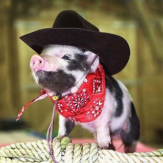 366_cowboy_pig.jpg