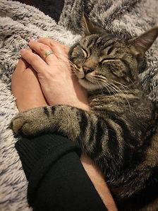 cat sleeping,cat sleeping in a human arm