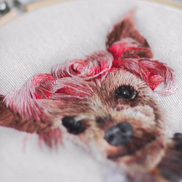 a pup with a killer hairdo! ❤️ How cute