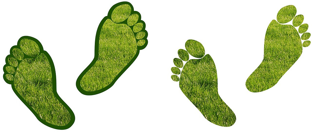 New Zealand Carbon Emissions Green Footprints