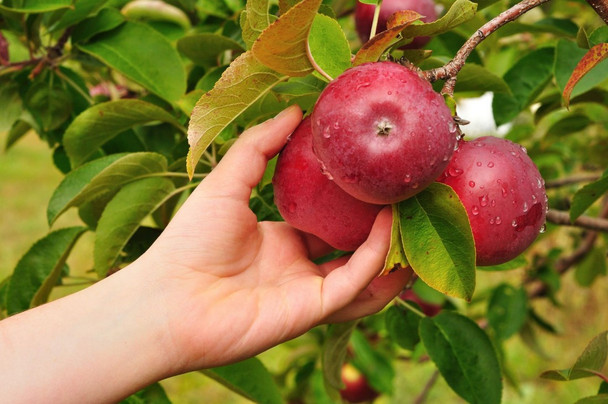 From Low Hanging Fruits to High Return on Investment