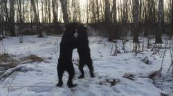 Зимой в лесу постоим