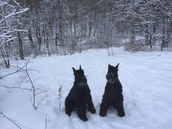 Зимой в лесу посидим