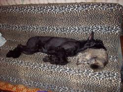 Гара и Соня ноябрь-декабрь 2009
