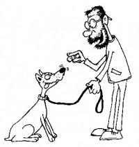 Как правильно поощрять собаку