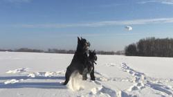 В снежки играем