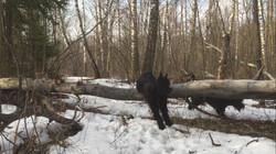 Зимой в лесу2