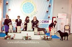 Бэст юниоров на всероссийской выставке САС, 16 марта 2013
