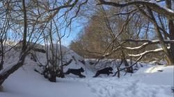 Мы в зимнем лесу