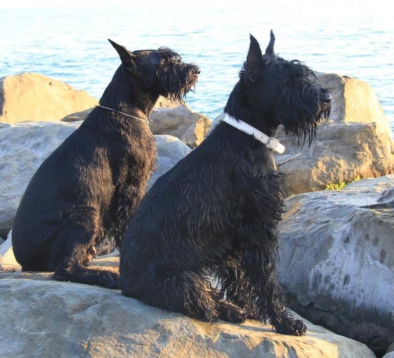 Гара и Веста на море 2013(1).jpg