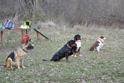 Выдержанные собаки