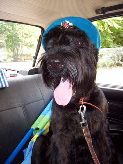 Гара - собака десантника! 2 авг 09