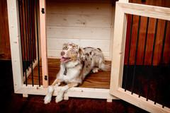 Single Dog Crate