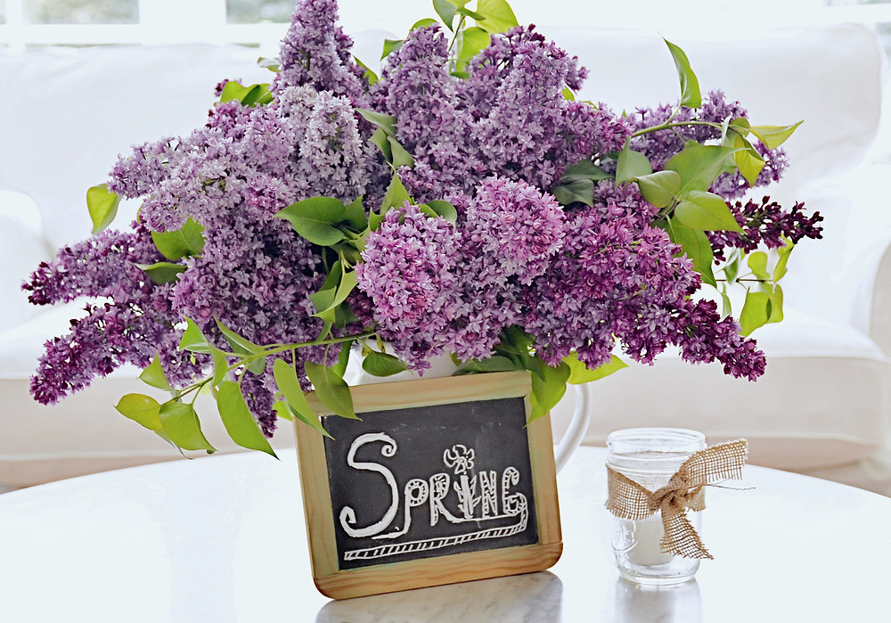 Bouquet of lilacs with small chalkboard w/ Spring quote on coffee table.