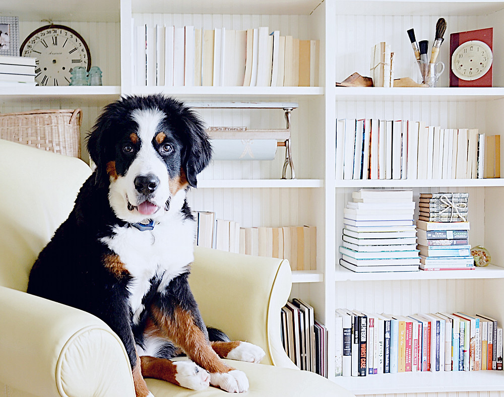 BUILTIN SHELFIE DECOR WITH BERNESE MOUNTAIN DOG
