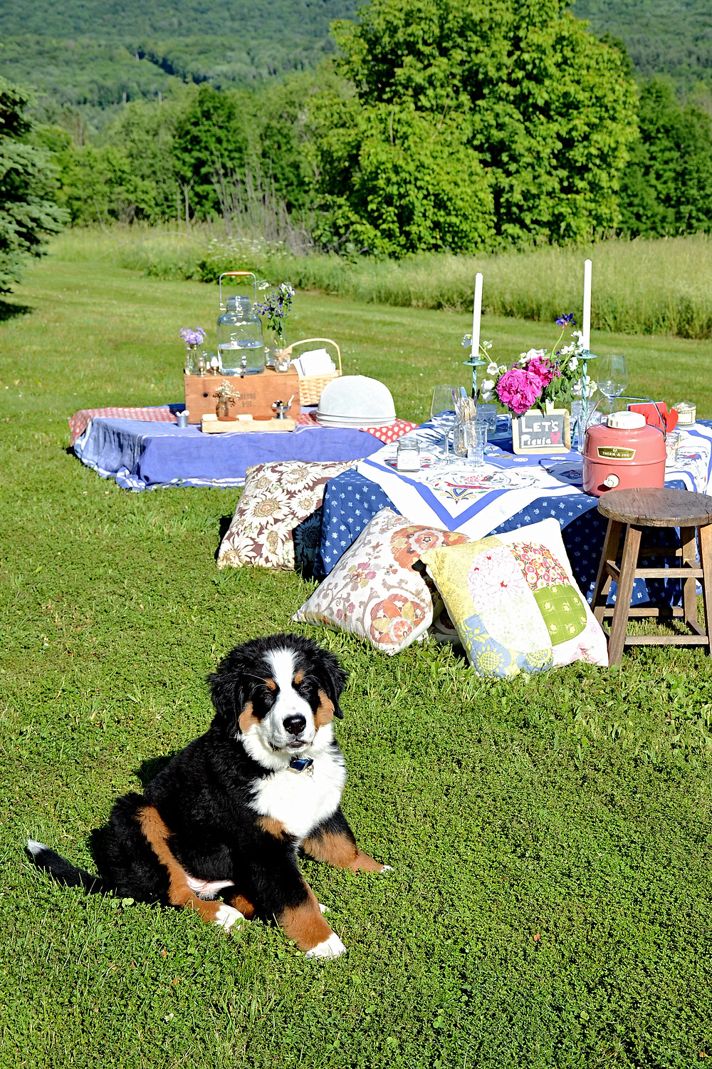Picnic Pallet tables styled w/ Bernese Mountain Dog puppy.