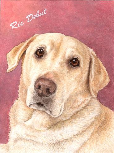 りっくん ラブラドール犬肖像画