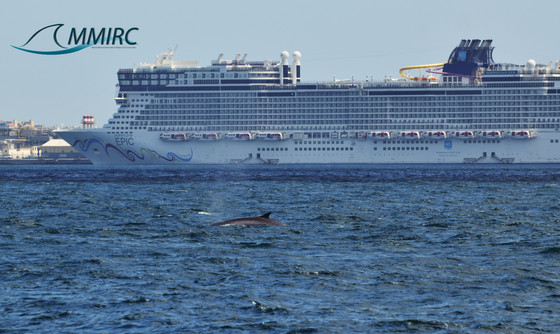 Spectacular sighting of a juvenile Fin whale in the Bay of Gibraltar