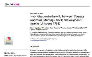 FIRST HYBRIDISATION IN THE WILD BETWEEN BOTTLENOSE AND COMMON DOLPHIN EVER RECORDED