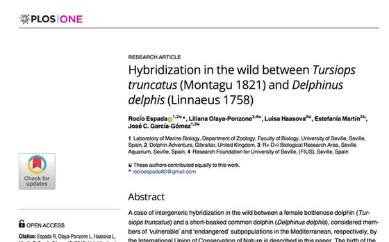 FIRST HYBRIDISATION IN THE WILDBETWEEN BOTTLENOSE AND COMMON DOLPHIN EVER RECORDED