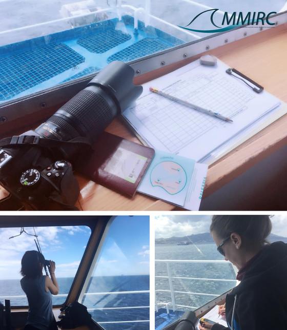Marine Mammal Observers - Ferry Project