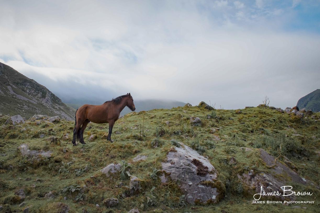 Horse at the Gap of Dunloe